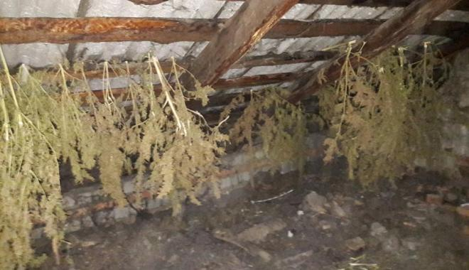 У мужчины изъяли 70 кустов конопли. Фото: пресс-службу ГУНП