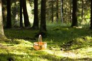 Девочки пошли за грибами и заблудились. Фото: dayout.lv