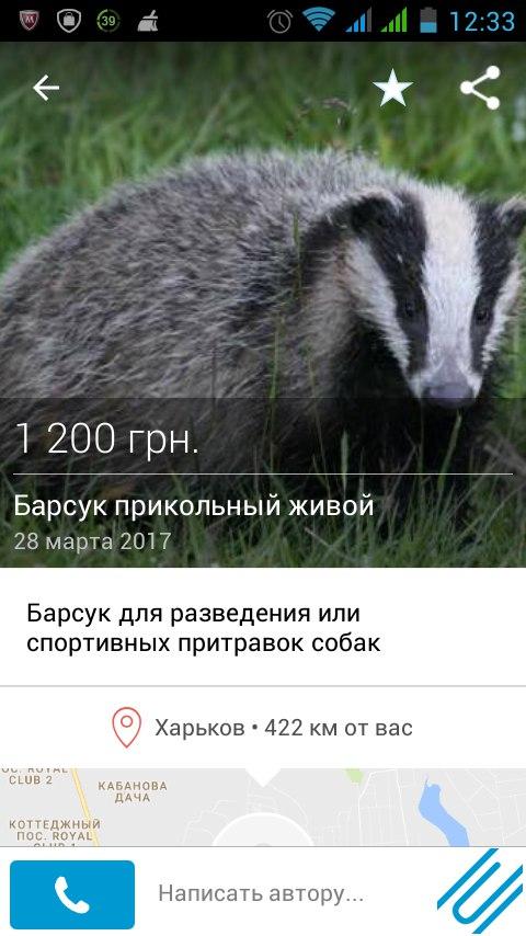 barsuk2.jpg