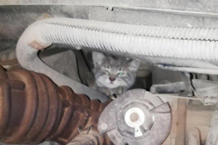 Фото: Порятунок тварин Харків