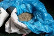 Семена конопли. Фото: hk.npu.gov.ua