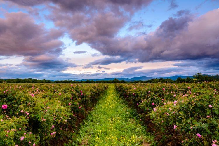21-valley_of_roses_bulgaria-e1566080040239.jpg
